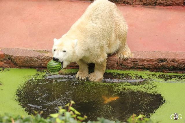 Zoo Rostock 02.10.201641
