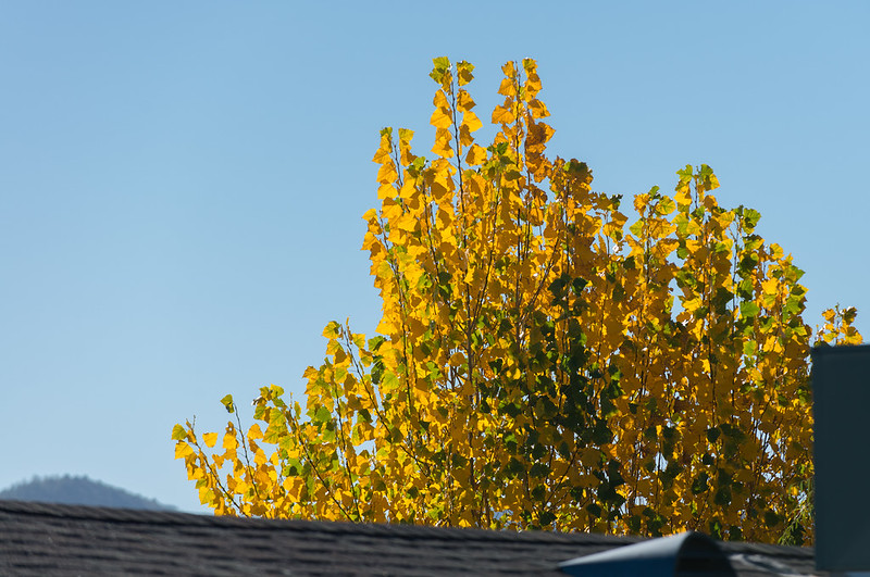 Fall Color Peeking Over Roof