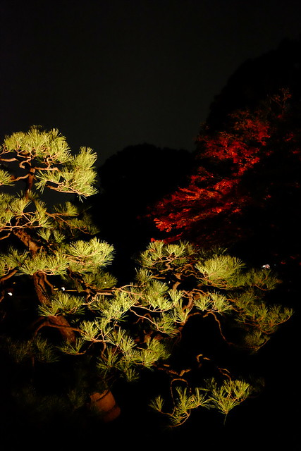 RIKUGIEN Colored Leaves light up 2016 02