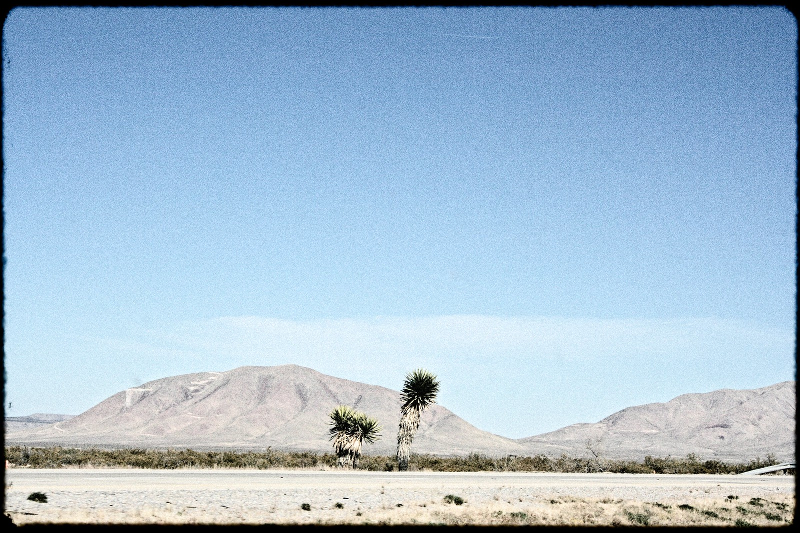 Roadside Palms, West Texas, 2006