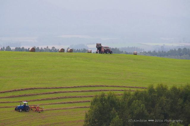 牧草ロールのある風景②