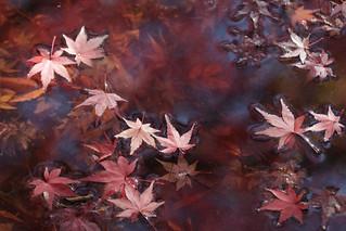 万博公園紅葉