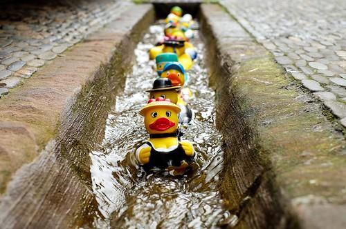 Rubber Duck Fun