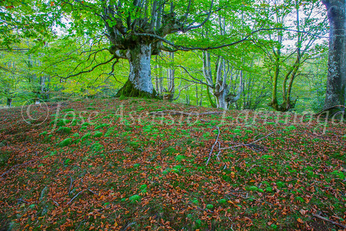 Parque Natural de #Gorbeia #DePaseoConLarri #Flickr      -1341