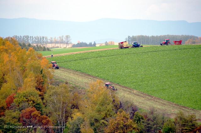 秋の丘風景2