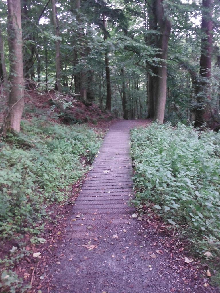 Strid Wood 2