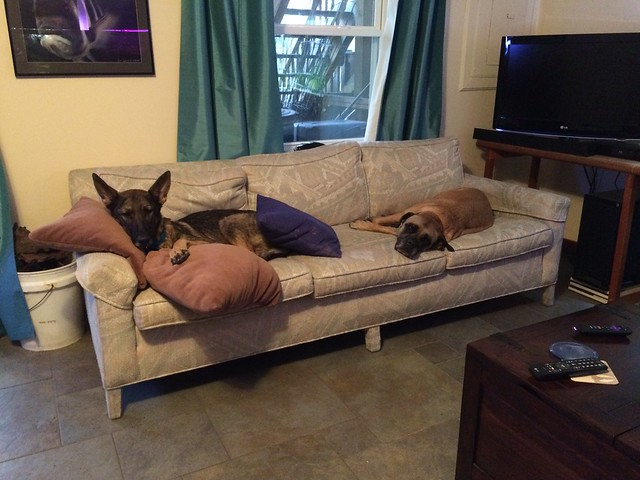 Greta and Zille on a couch.