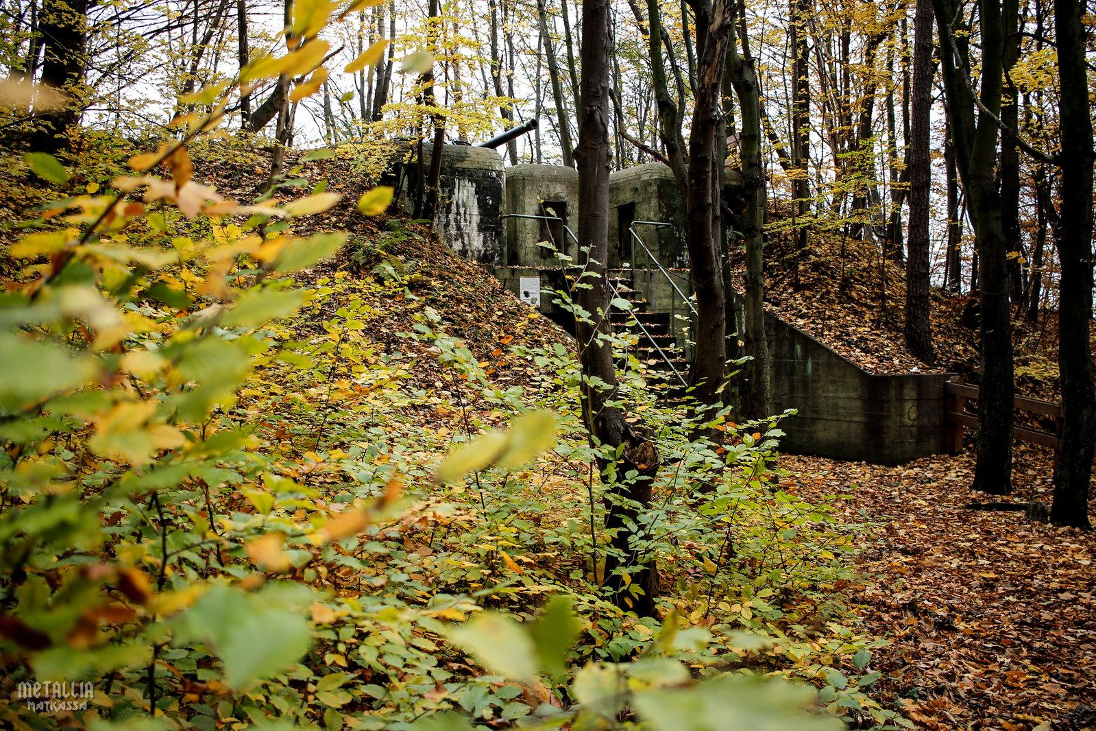 gdynia, redłowo, rezerwat przyrody kępa redłowska, kępa redłowska nature reserve, tricity sightseeing, gdynia sightseeing, 130mm cannon, second world war