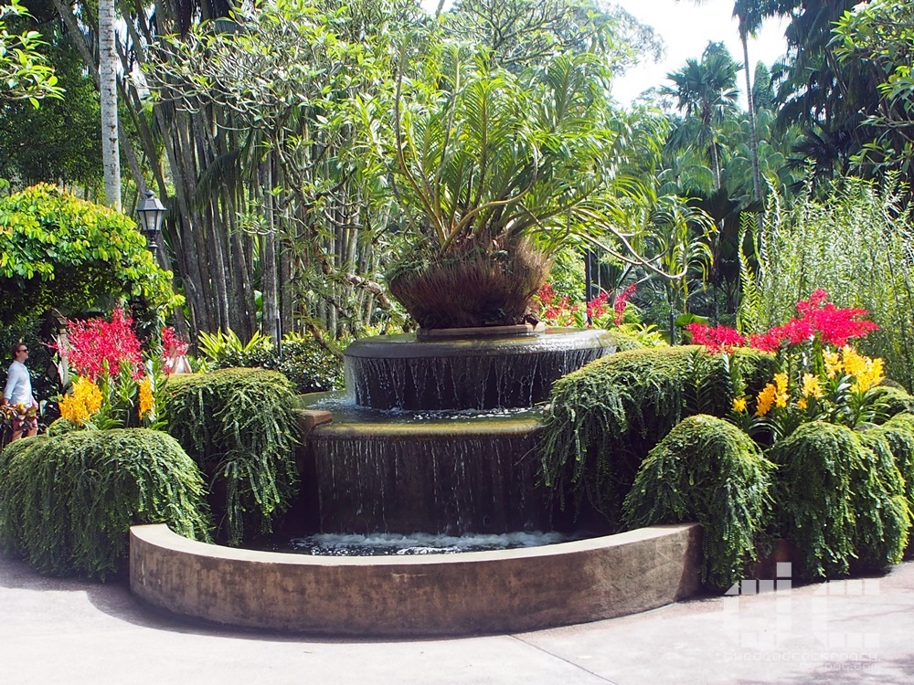 botanic garden, places of interest, singapore, singapore botanic garden, unesco,  where to go in singapore, national orchid garden,vip orchid garden,tiger orchid fountain,orchid