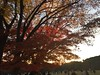 秋季ITSウォーキング大会 代々木公園