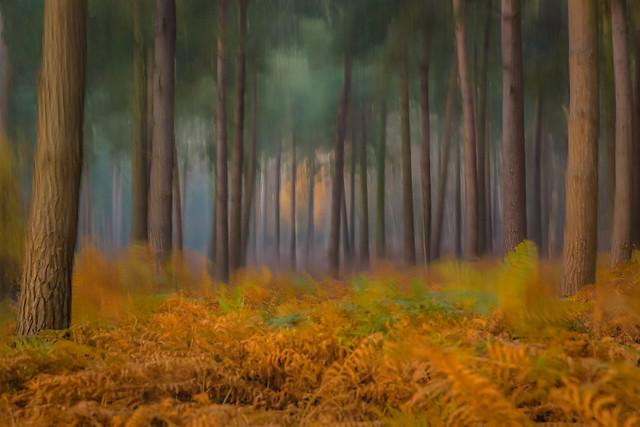 Haddon Woods