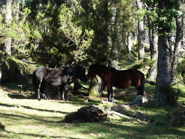 Caballos en A Fragavella