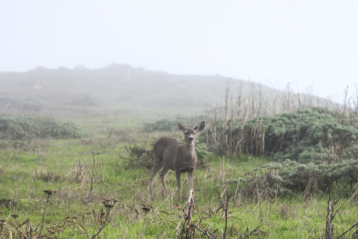 10pointreyes-seashore-coast-deer-travel-style