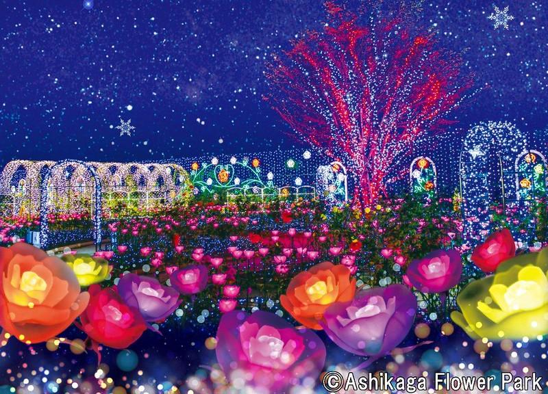 Ashikaga Flower Park Flower Fantasy(2)