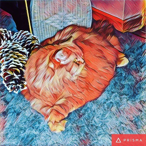 My mother's giant floof cat, Prismafied! #catsofinstagram #persiancat #prisma