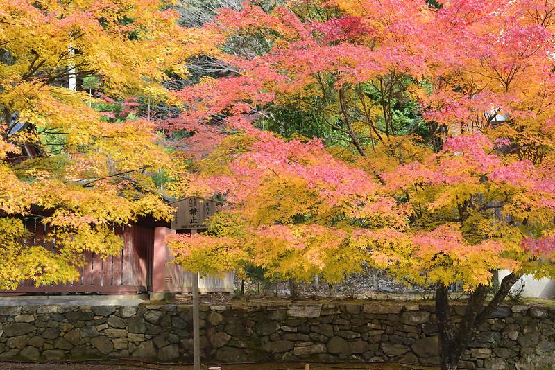 京都 神護寺 紅葉