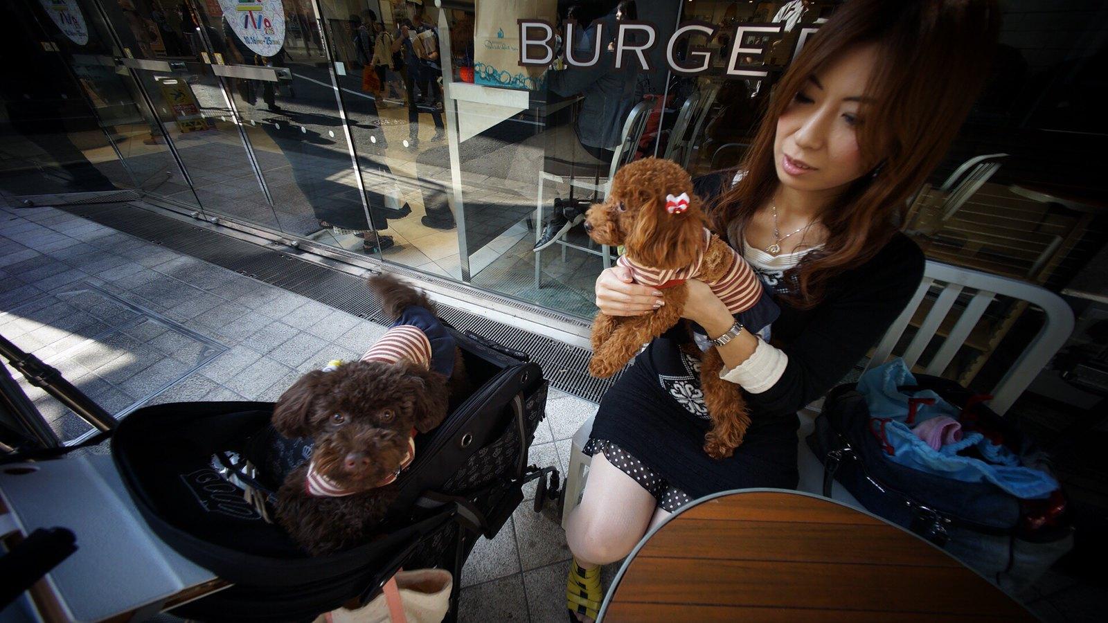Matthew Joseph: Japanese Dog Photographer. #SonyA7 #Shibuya #Tokyo #Voigtlander12mm #dogsofinstagram #foto #japan15