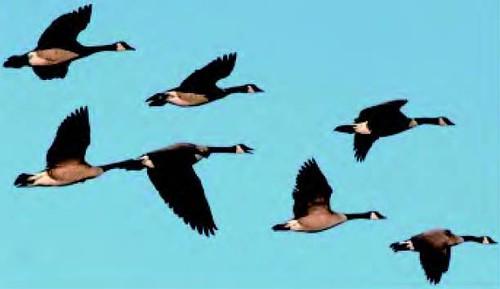 दुर्लभ जल पक्षियों और जैव विविधताओं के संरक्षक हैं नम भूमि