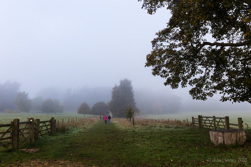 A foggy morning at Kingston Lacy