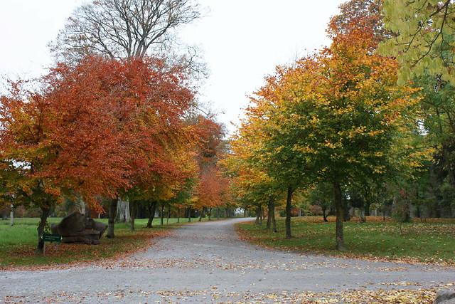 autumn in Birr castle grounds