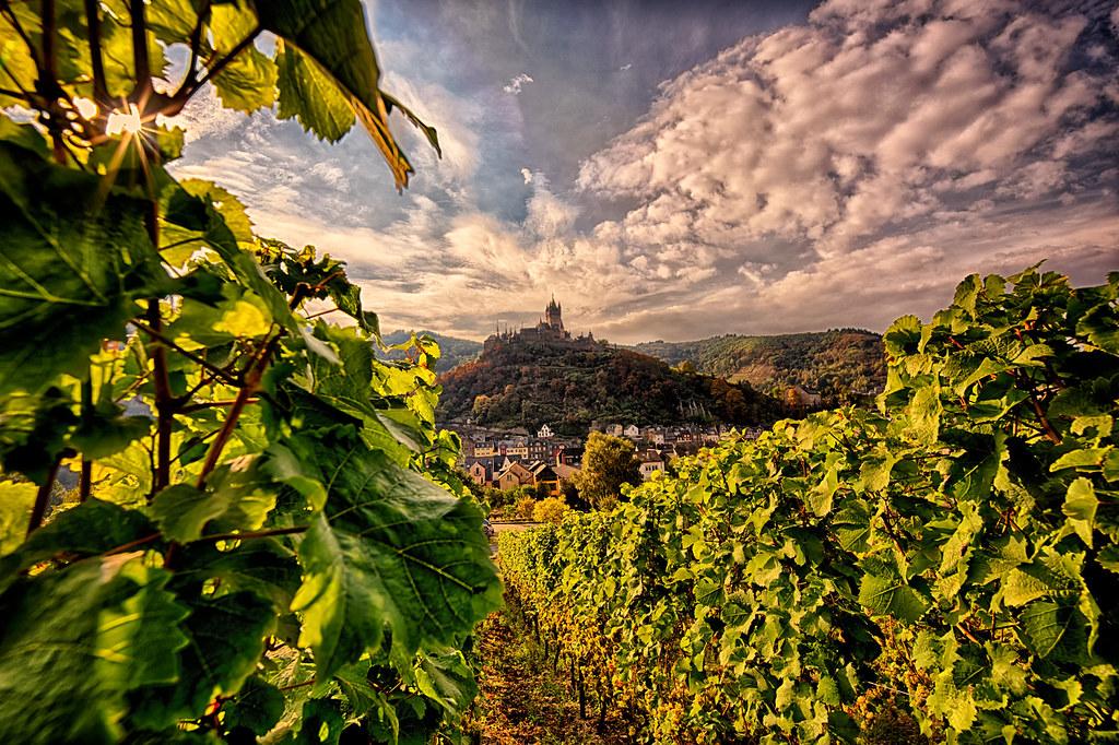 Blick aus dem Weinfeld zur Reichsburg Cochem HDR