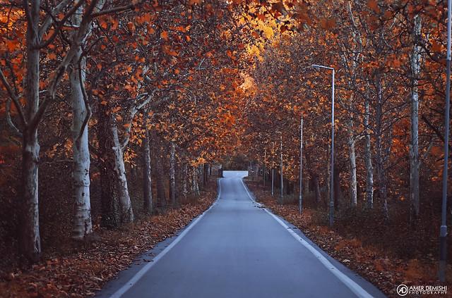 Autumn Road | Ohrid