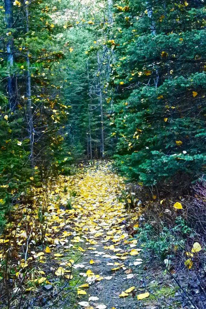 Cabin Lake trail4 4