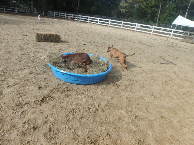 10/25/16 Hay Play & Bobbing For Pumpkins!!