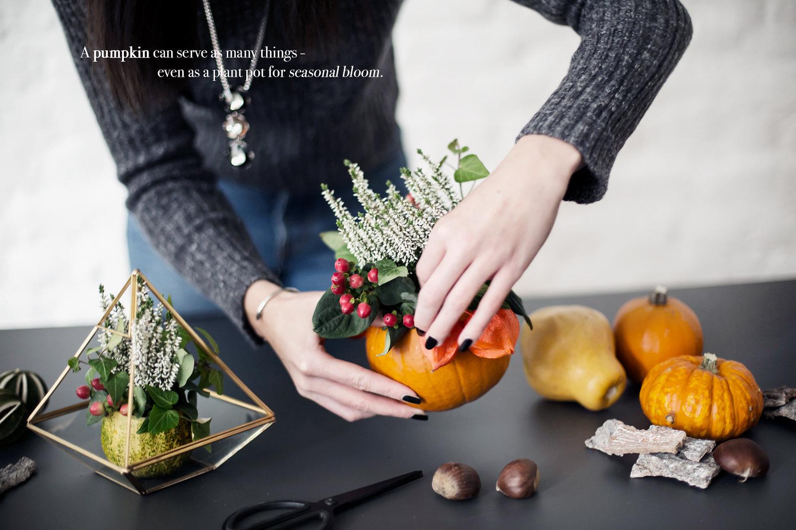 1000 gute gründe initiative pflanzen heide kürbis pumpkin pflanztöpfe gesteck halloween tischdekoration plant dinner style diy lifestyle modeblog germanblogger fashionblogger cats & dogs ricarda schernus 5