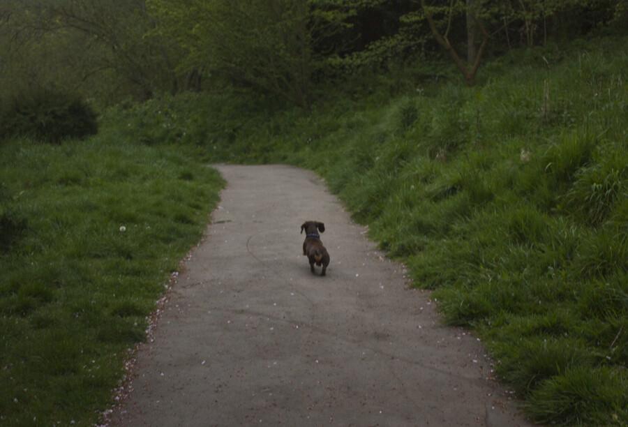 saltburn, saltburn by the sea, north east england, visit saltburn, beach, uk, coastline, seaside, uk coast, coastal, dachsund, mini dachsund, dog, sausage dog, mini sausage dog