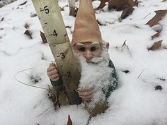 snow on gnome IMG_9487