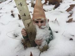 snow on gnome IMG_9487