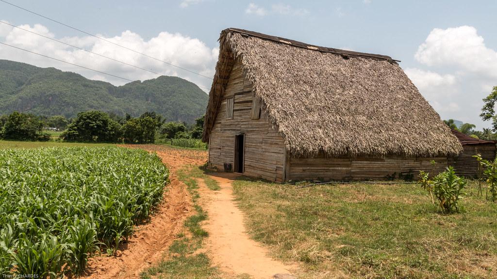 Maison du Tabac - Viñales - [Cuba]