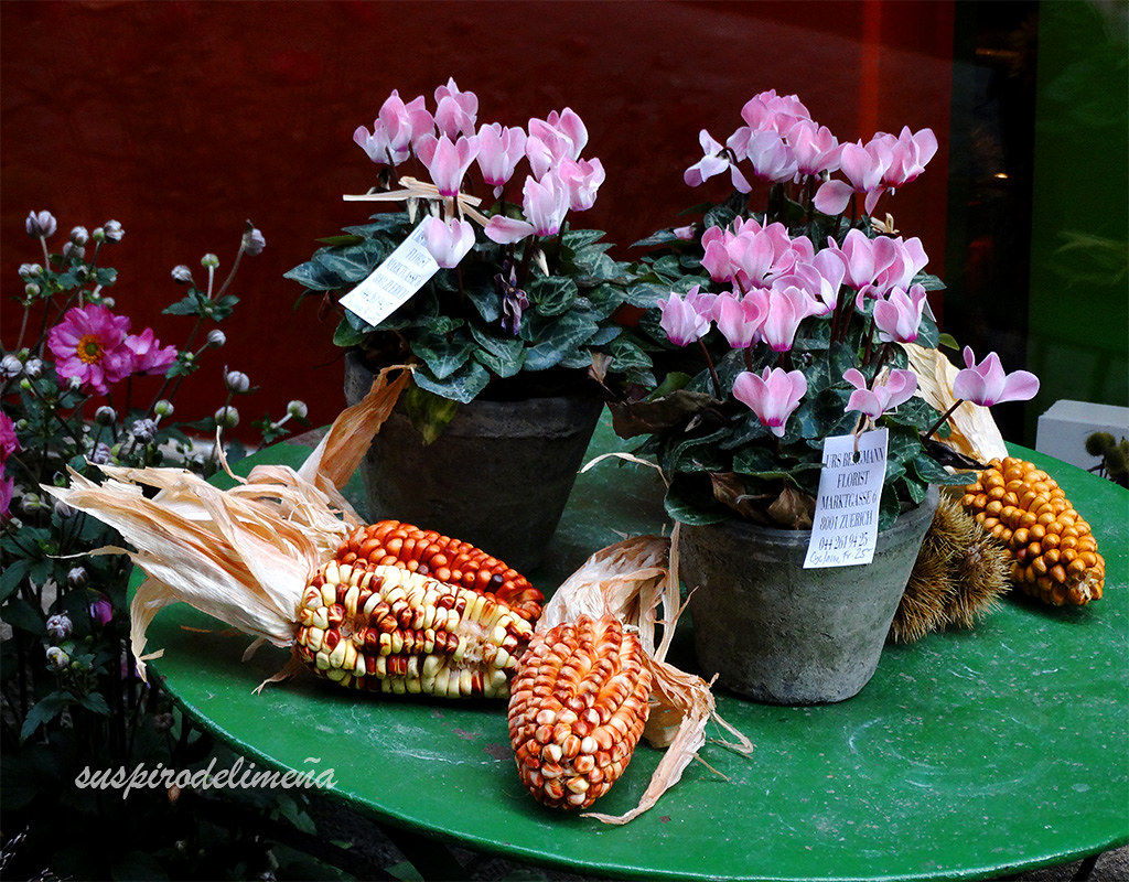 Floristería. Choclos y flores