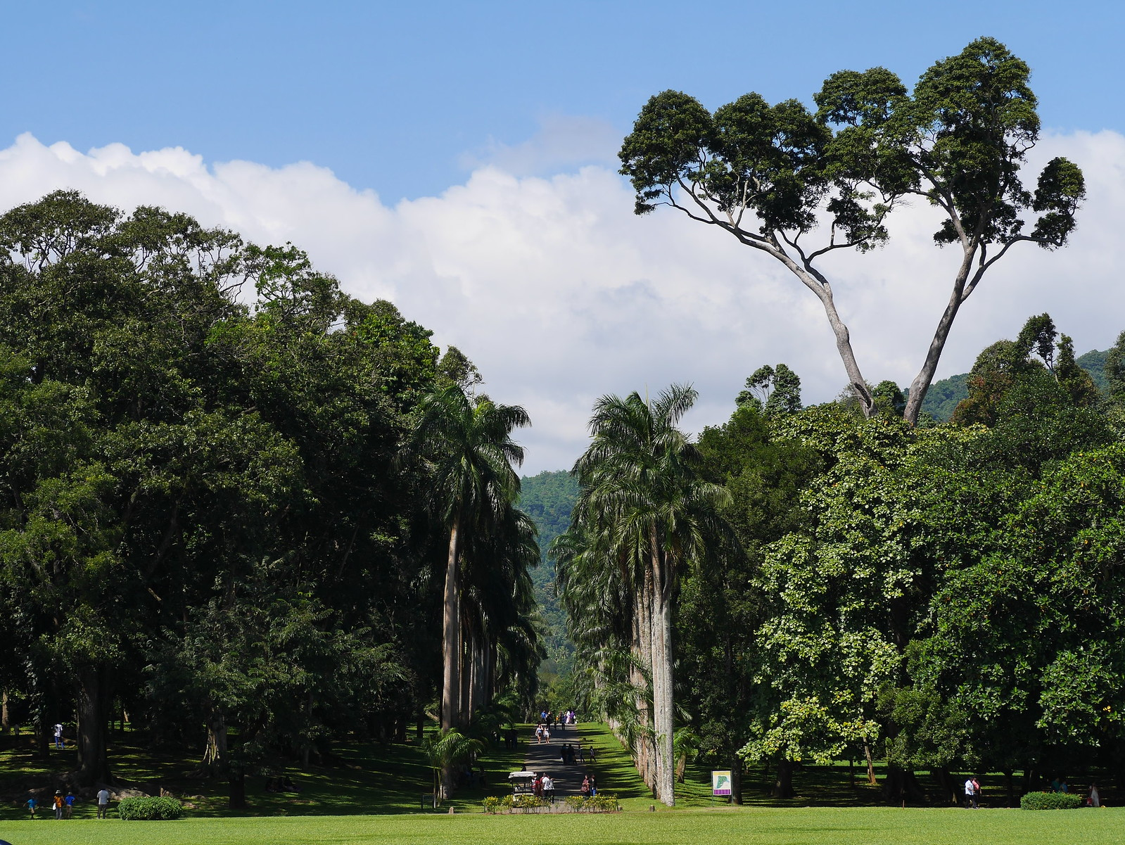 Kandy Botanical Gardens, Sri Lanka