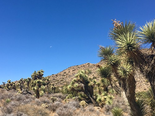 Moon Over Yucca