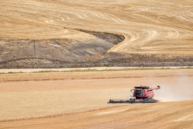 Bringing in the Sheaves | The Palouse, WA