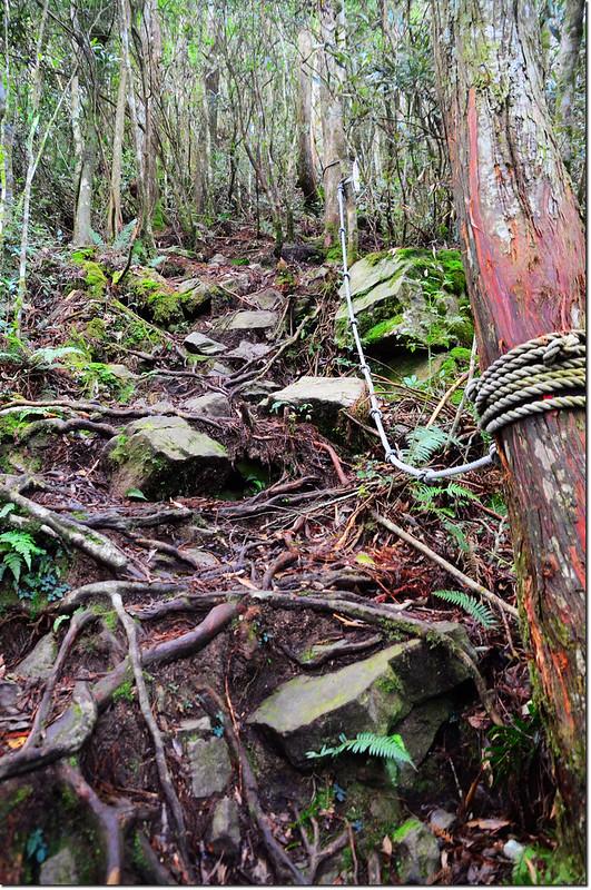 橫嶺山登山步道 3