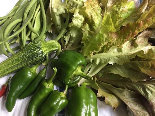 harvest IMG_8783