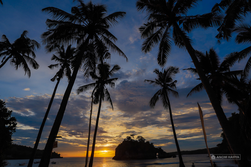 Pohon Kelapa sebagai foreground