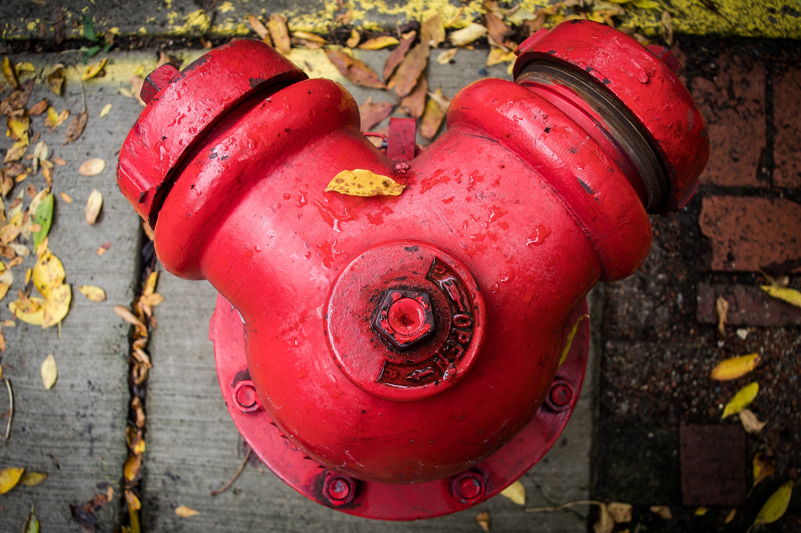 (296/366) Autumn Hydrant