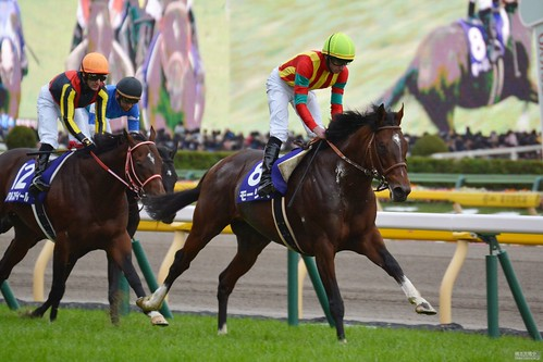 天皇賞(秋) Tenno Sho (Autumn) モーリス Maurice (JPN) ゴール直後