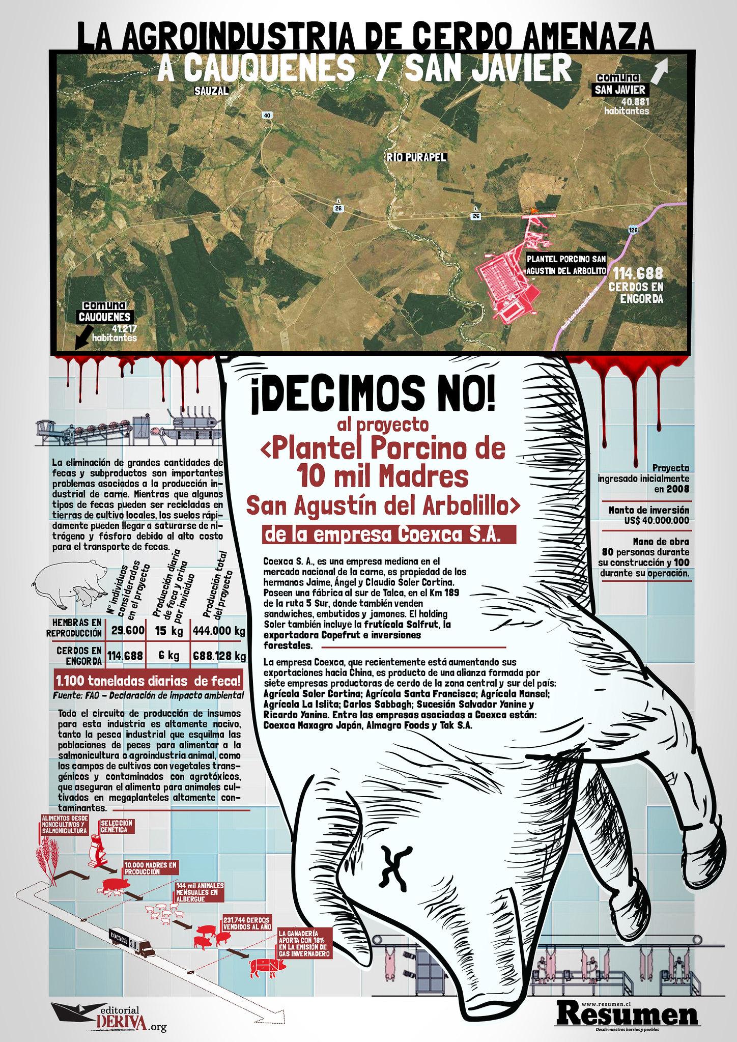 INFOGRAFÍA: LA AGROINDUSTRIA DE CERDO AMENAZA A CAUQUENES Y SAN JAVIER