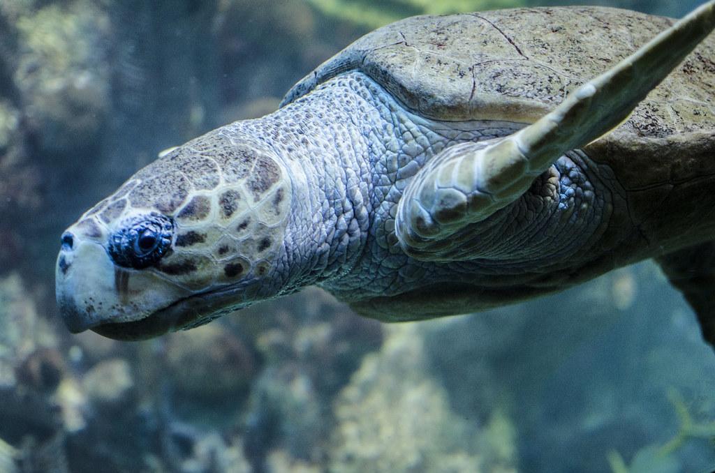 aquarium 8