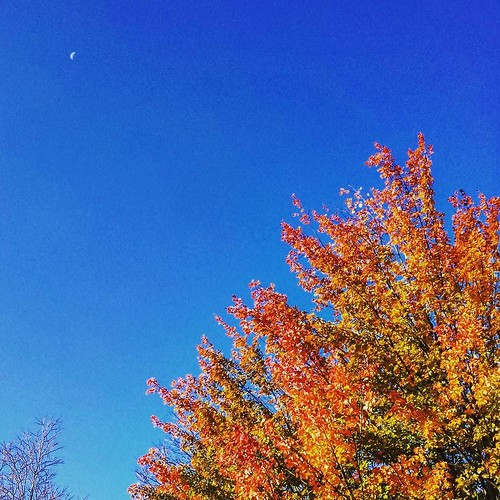 Turning leaves beneath the moon #KnoxFarm #EastAurora #wny #autumn #moon