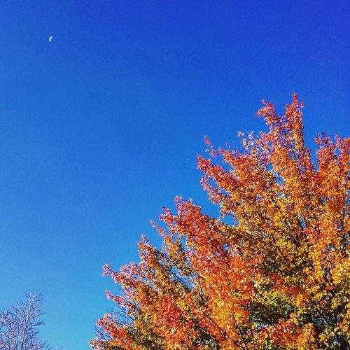 Turning leaves beneath the moon #KnoxFarm #EastAurora #wny #autumn #moon