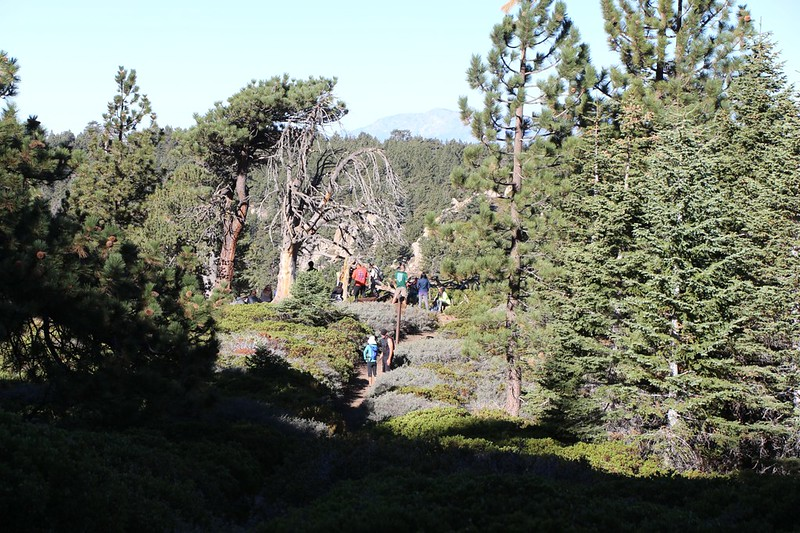 Saturday morning hikers at the trail junction of the Johns Meadow and San Bernardino Peak Trails