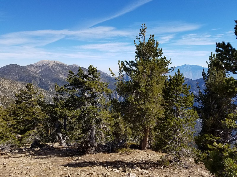 San Bernardino Peak • Mount San Gorgonio and San Jacinto