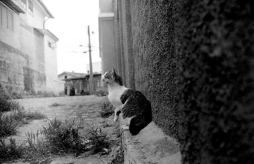 Gato en un pasaje del Cerro Concepción