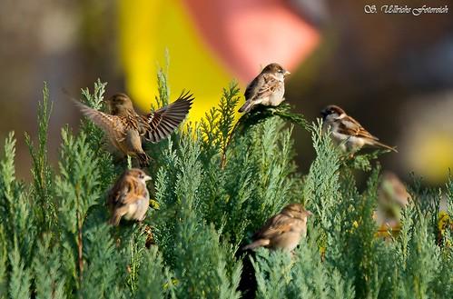 Es vögelt in meinem Garten! - Seite 2 30868488101_c2e952a1b6